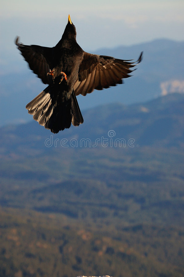 Download Crow Stock Photography - Image: 8649142