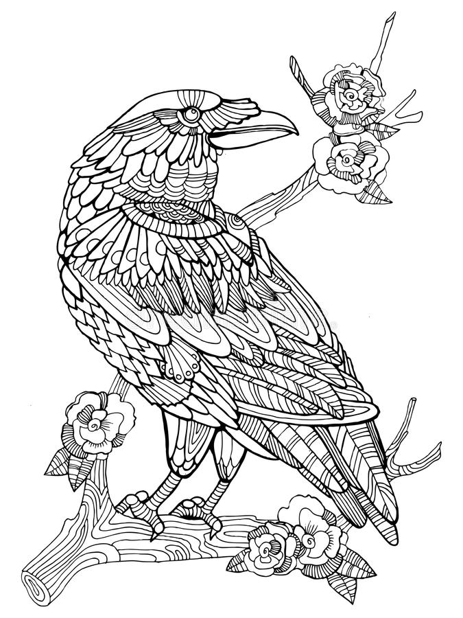 Download Crow Bird Coloring Book For Adults Vector Stock