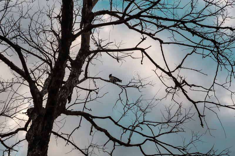 A crow on a dead tree stock photo