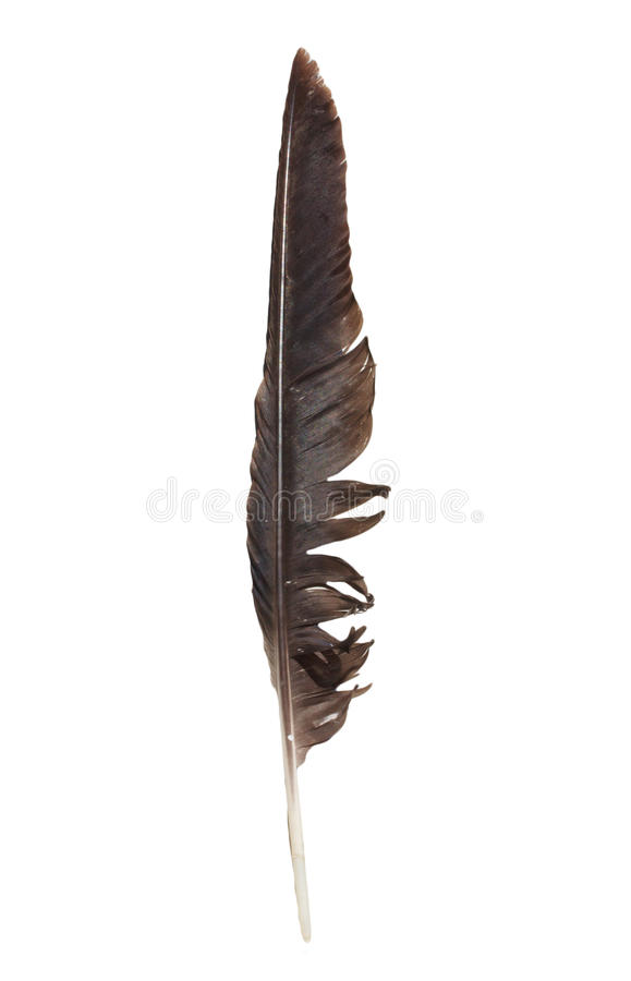 Crow feather stock photography