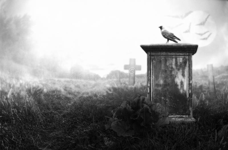 Crow on a gravestone. Crow sitting on a gravestone in moonlight stock photo