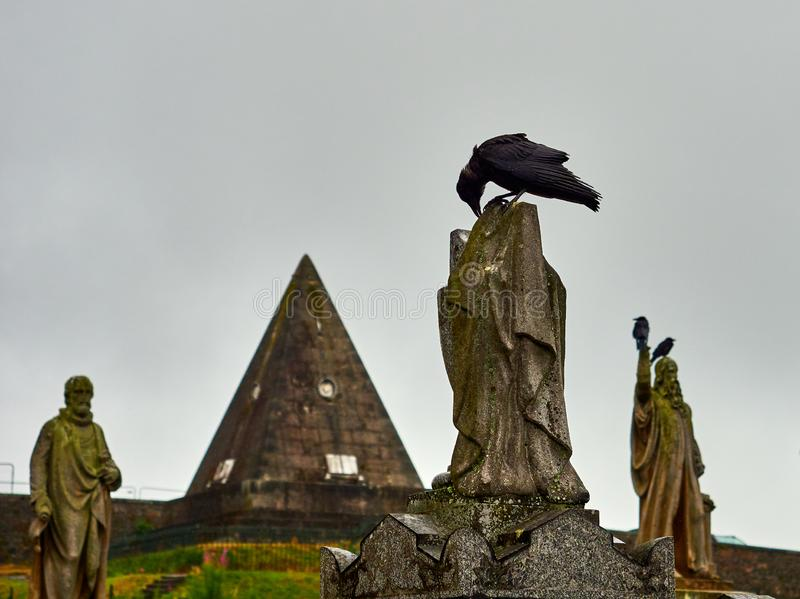 Crow looking for food at the top of a statue, Stirling cemetery, Scotland stock images