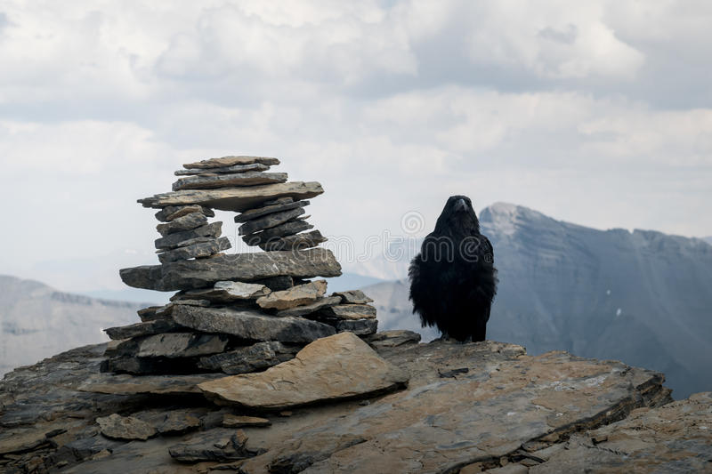 Crow on mountain top royalty free stock photography