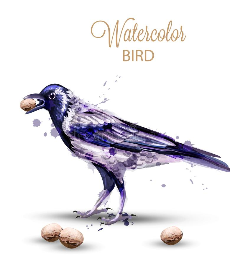 Crow with a nut watercolor Vector. Fall season isolated bird on white backgrounds stock illustration