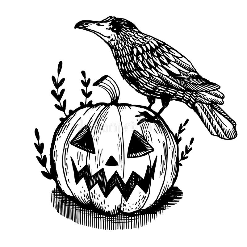 Crow and pumpkin engraving vector illustration. Crow bird and halloween pumpkin engraving vector illustration. Scratch board style imitation. Hand drawn image vector illustration