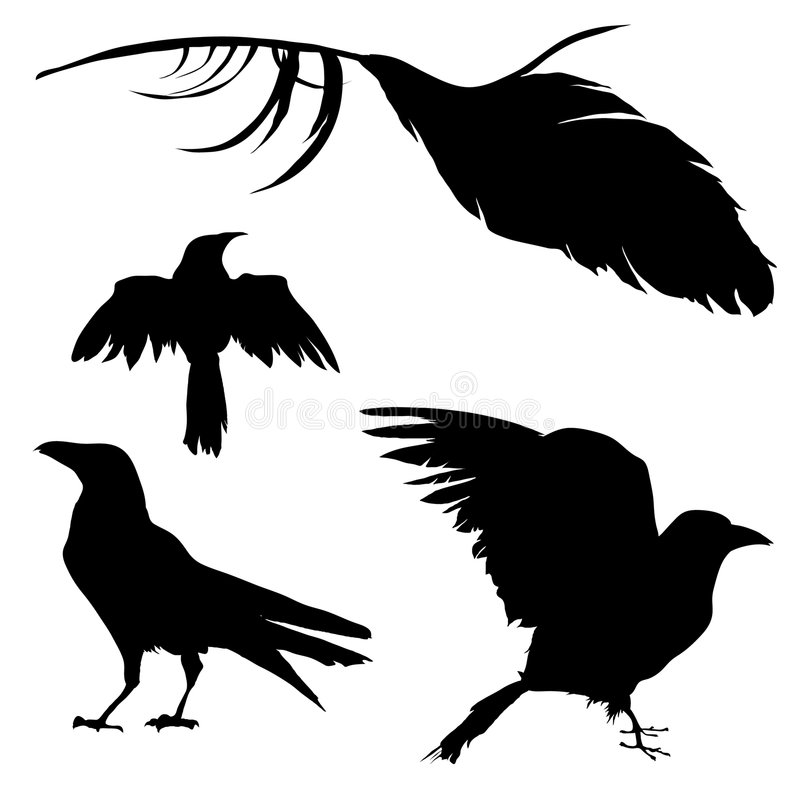 Crow, Raven, Bird, and Feather stock illustration
