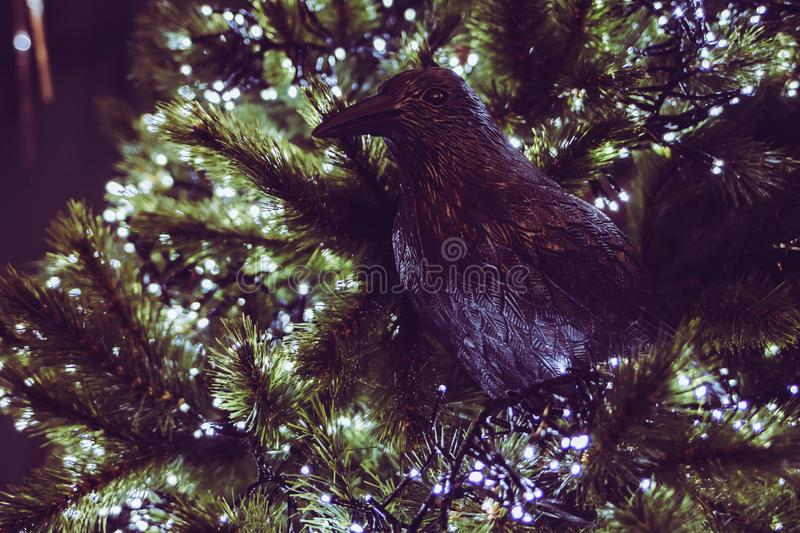 Crow or raven in christmas tree with lights royalty free stock images