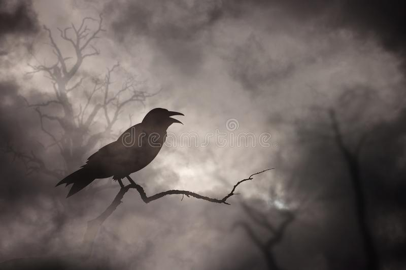 Download Crow or raven resting stock photo. Image of crow, branch - 108922212