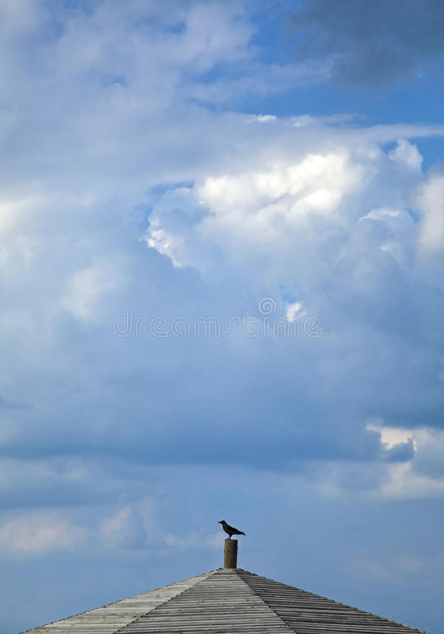 Download Crow On A Roof Stock Photo - Image: 29911240
