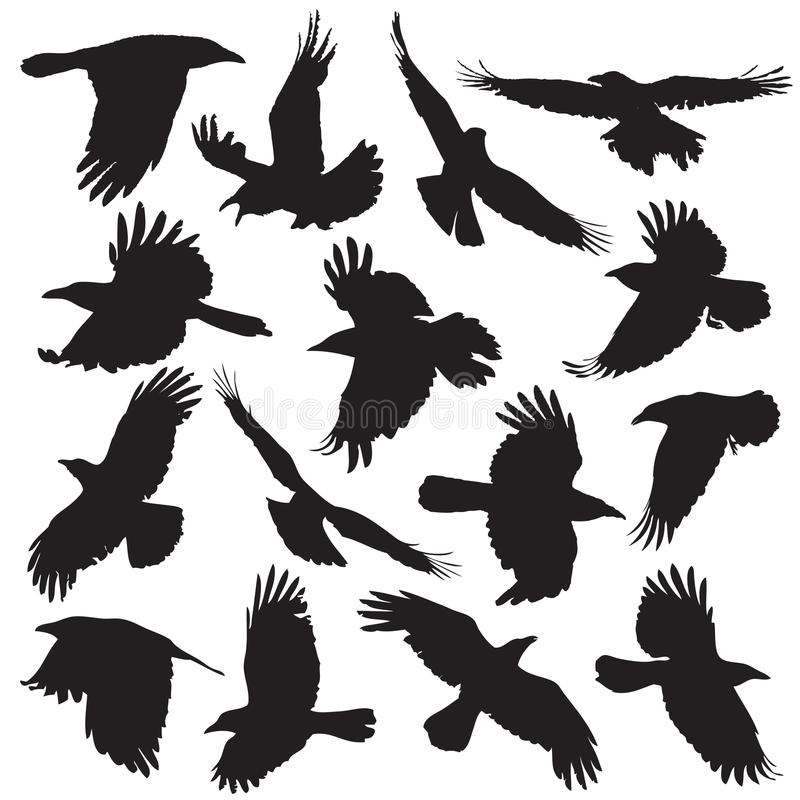 Free Crow Silhouette Set 01 Stock Images - 35632084