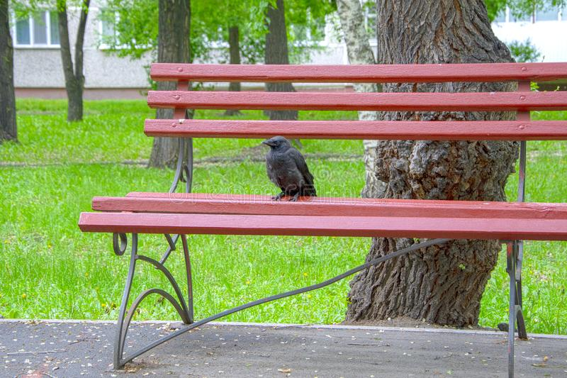 Crow sits on a park bench stock images