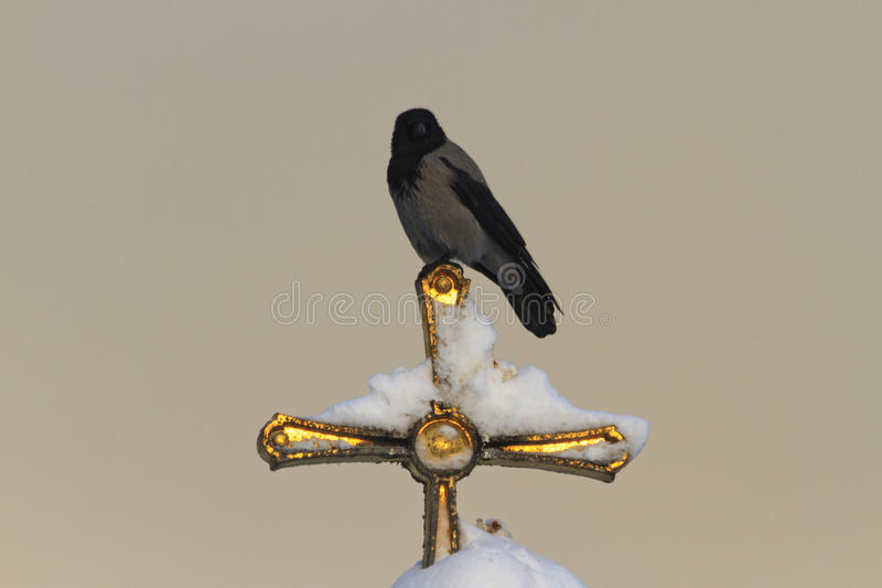 Crow sitting on a golden cross stock photos