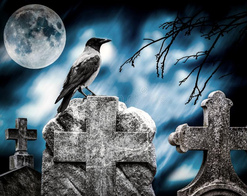 Crow sitting on a gravestone in moonlight at cemetery stock image