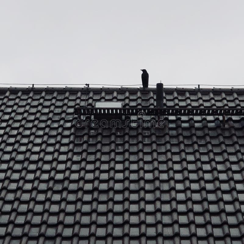 Crow sitting on the roof of the house royalty free stock photos