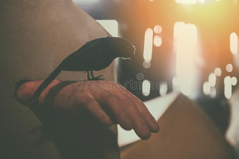 Crow sitting on a zombie hand halloween in abandoned house at night with moonlight royalty free stock photography