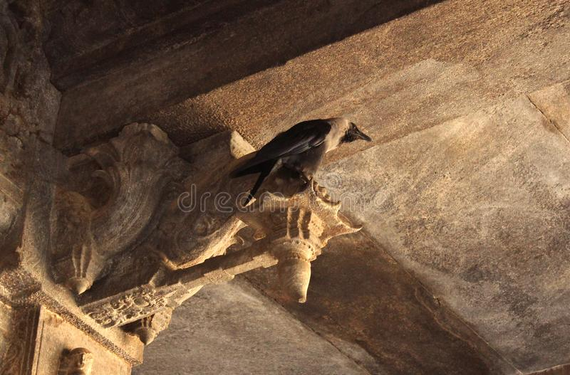 A crow in temple hall. Jalakandeswarar temple dedicated to lord shiva which is located in the Vellore Fort, Tamil Nadu State, India The Jalakanteshwara temple is royalty free stock photography