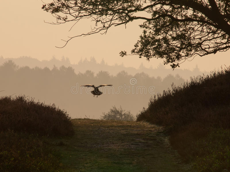 Download Crow on track stock image. Image of harmony, mystery - 22728685