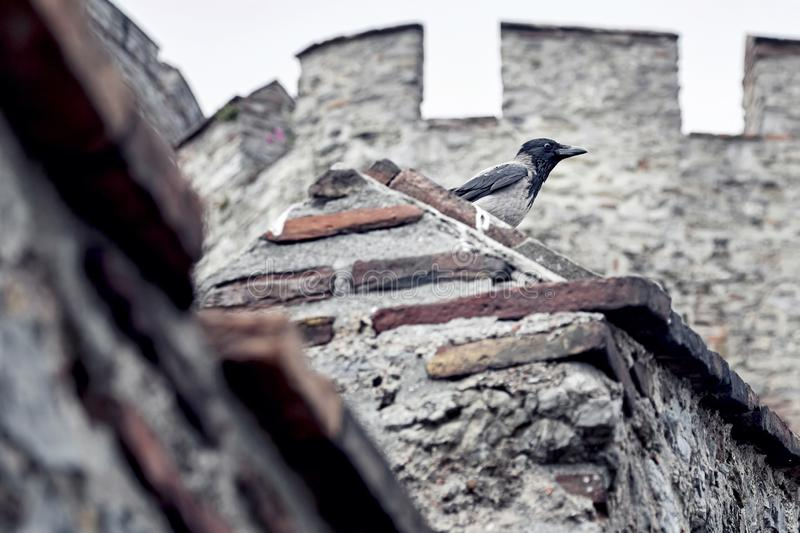 Crow on the walls of a castle stock photo