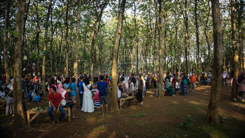 Crowd of anonymous people walking through forest jati trees royalty free stock photography