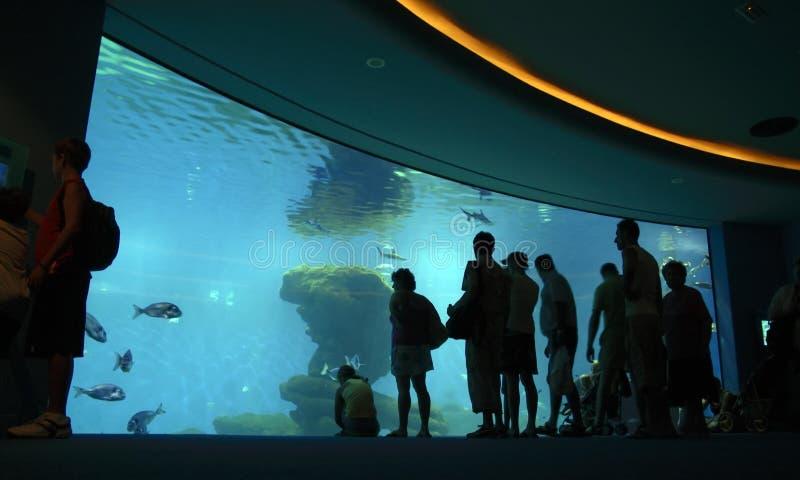 Crowd looking at aquarium stock photos