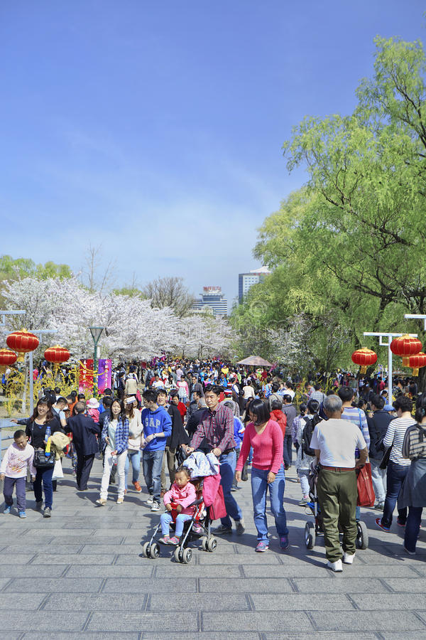 Crowd at Yuyuantan park during Spring Cherry Tree Blossom, Beijing, China. BEIJING-MARCH 30, 2014. Crowd at Yuyuantan Park. Spring cherry tree blossom attracts royalty free stock photo
