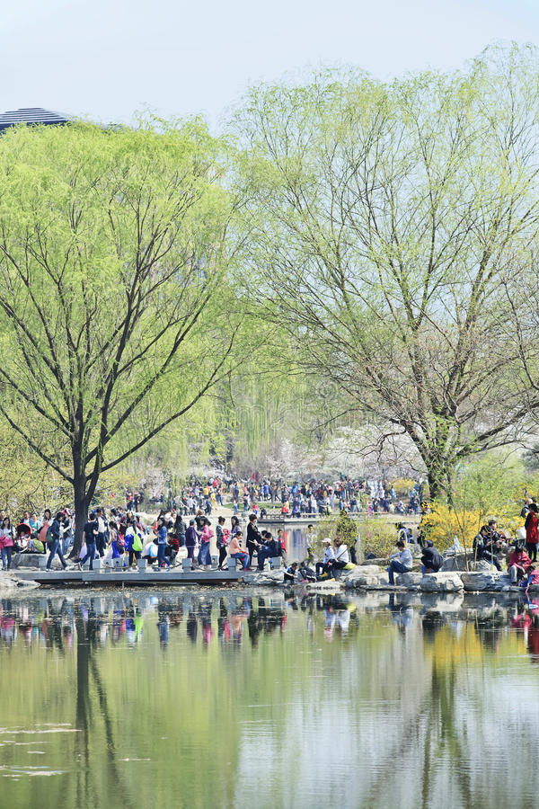 Crowd at Yuyuantan park during Spring Cherry Tree Blossom, Beijing, China. BEIJING-MARCH 30, 2014. Visitors enjoy Yuyuantan Park in spring. The history of stock photo
