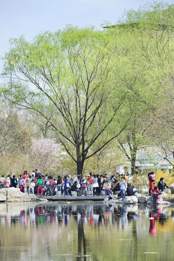Crowd at Yuyuantan park during Spring Cherry Tree Blossom, Beijing, China. BEIJING-MARCH 30, 2014. Visitors enjoy Yuyuantan Park in spring. The history of stock images