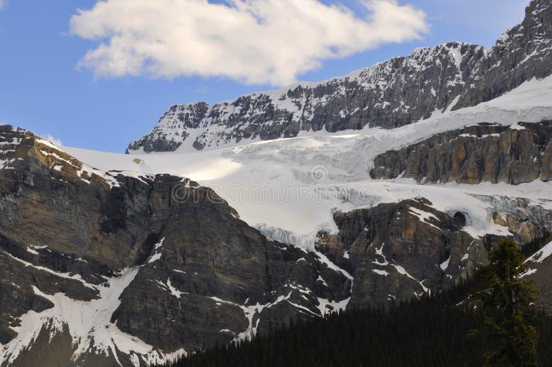 crowfoot lodowiec zdjęcia royalty free