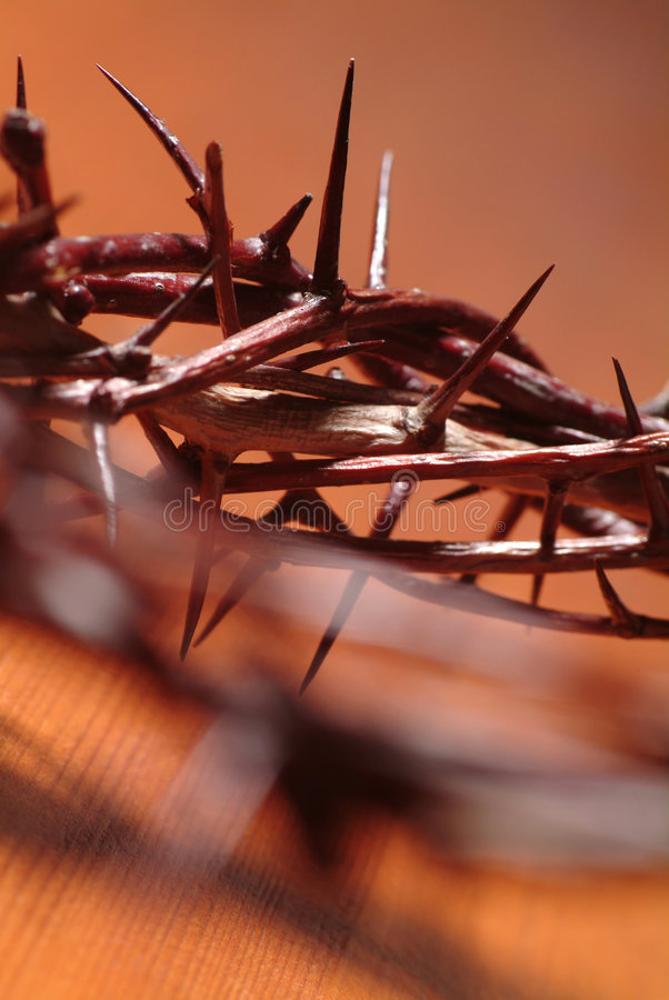 Free Crown Of Thorns Stock Photos - 8414493