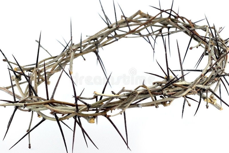 Download Crown Of Thorns Royalty Free Stock Photos - Image: 2151638