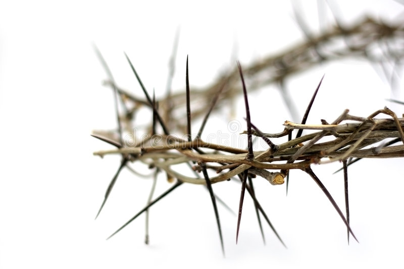 Crown of thorns. A real crown of thorns