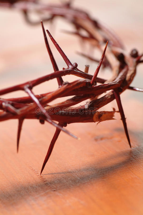 Crown of Thorns royalty free stock photography