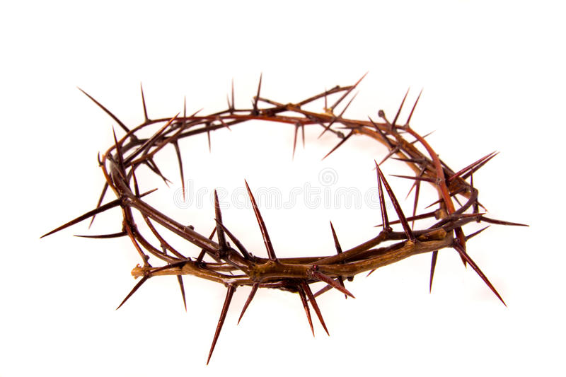 Crown of thorns. Isolated on white background, copy spase. Christian concept of suffering royalty free stock photography