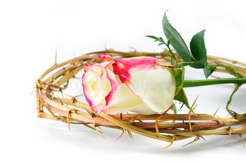 Crown Of Thorns And Rose Royalty Free Stock Photography
