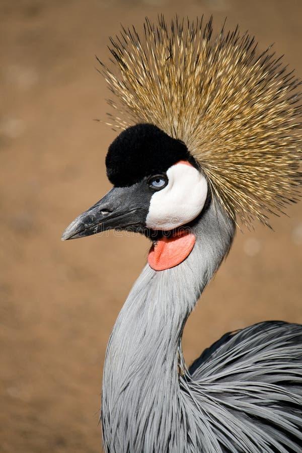 Free Crowned Crane Royalty Free Stock Photos - 6716748