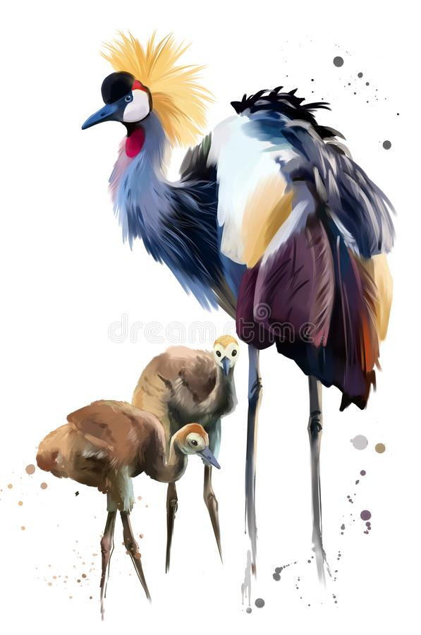 Crowned crane and Chicks. Watercolor painting. Watercolor painting. White background stock illustration