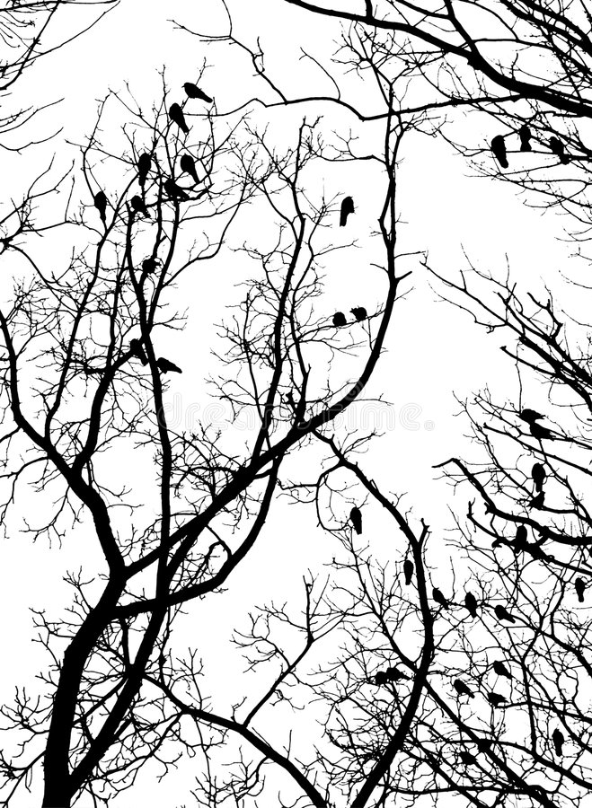 Download Crows (2) Stock Image - Image: 1979601