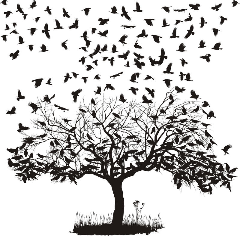 Free Crows In A Tree Royalty Free Stock Photography - 24862867