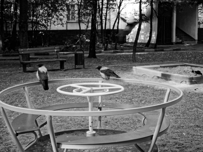 Crows on the Playground in the morning. Moscow stock photo