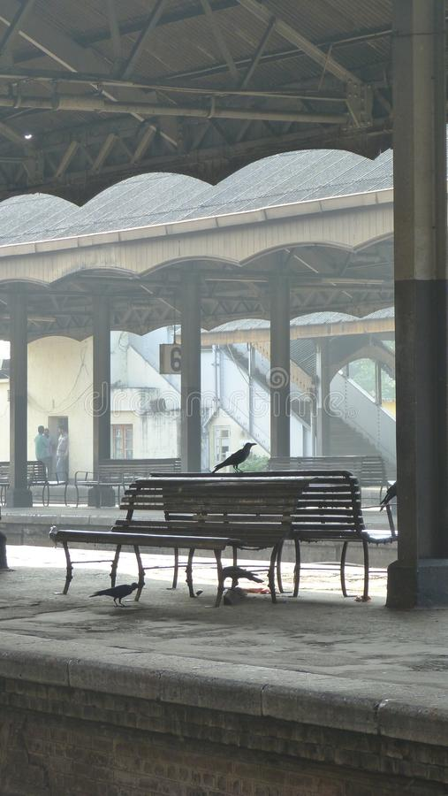 Crows at train station stock image