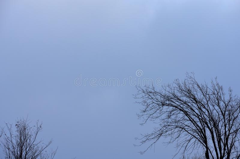 Crows gathered in a tree, midwinter royalty free stock photography