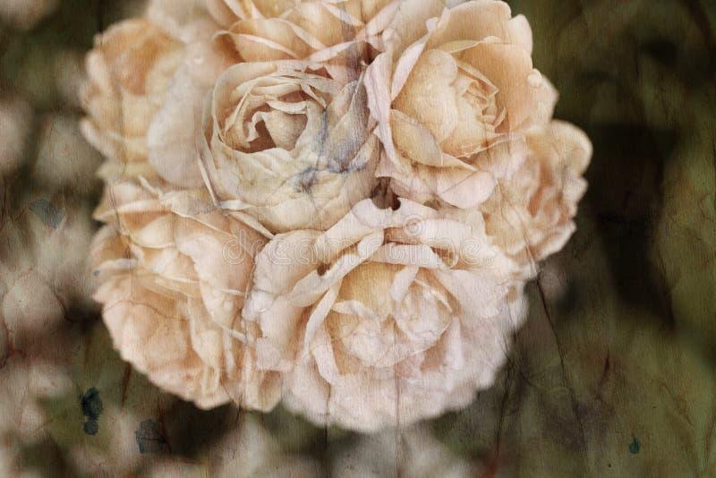 Cru de roses de fond de photo rétro photos libres de droits