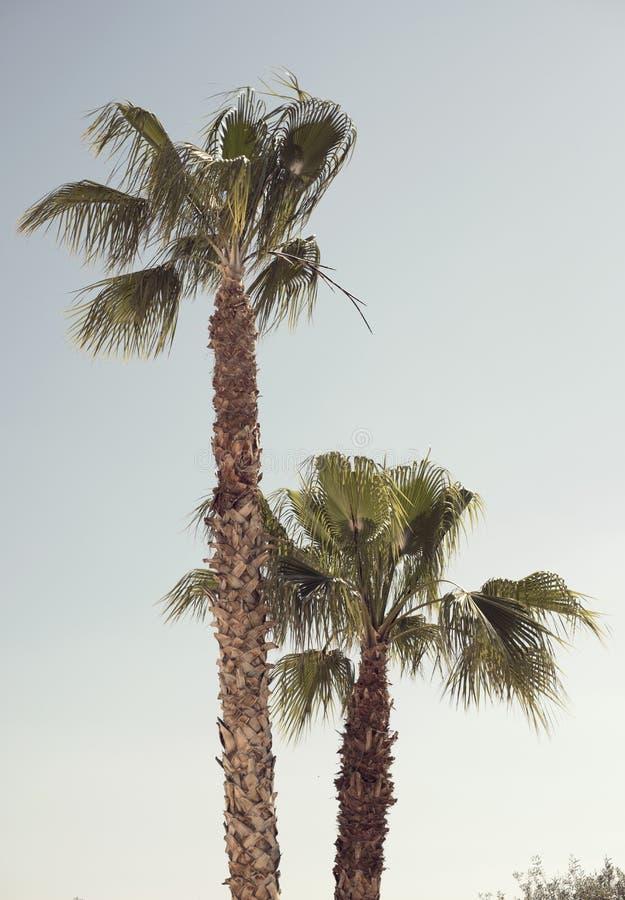 Cru regardant des palmiers photographie stock libre de droits