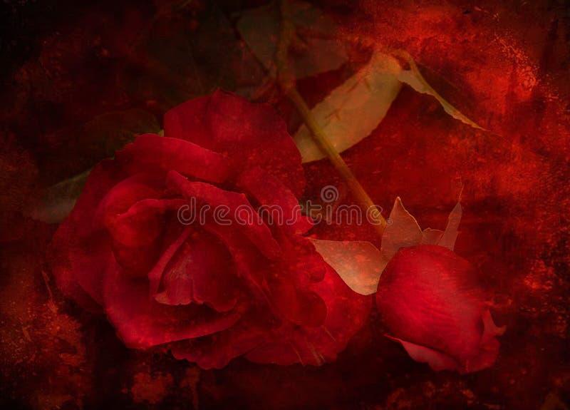 Cru Rose illustration stock