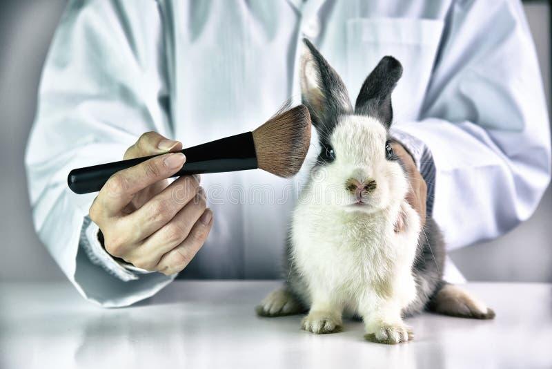 Cruauté gratuite et concept animal d'abus d'arrêt photographie stock