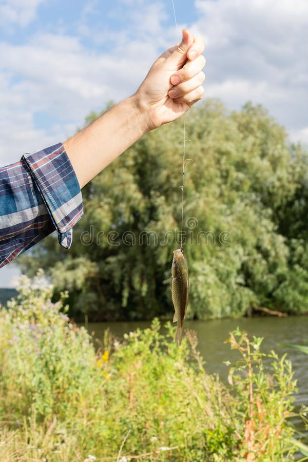 Crucian op een hengelhaak stock foto