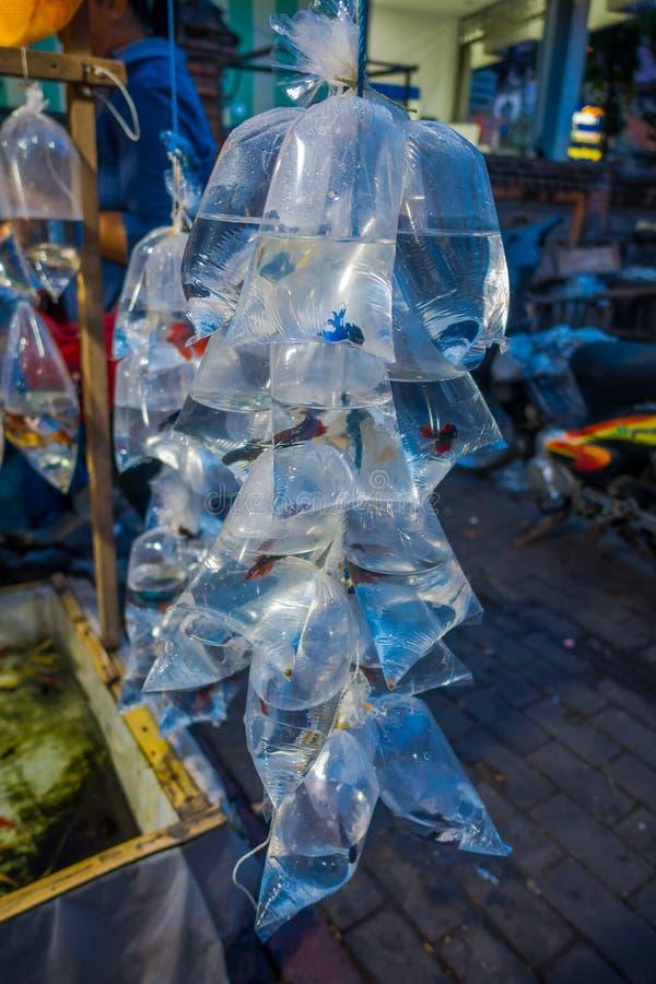 Crudo dei sacchetti di plastica, con differenti specie di pesci in un mercato a Denpasar, Bali in Indonesia fotografia stock libera da diritti