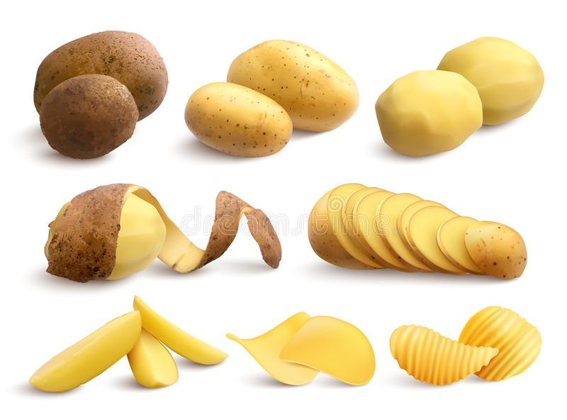 Crudo y Fried Potato Realistic Set libre illustration