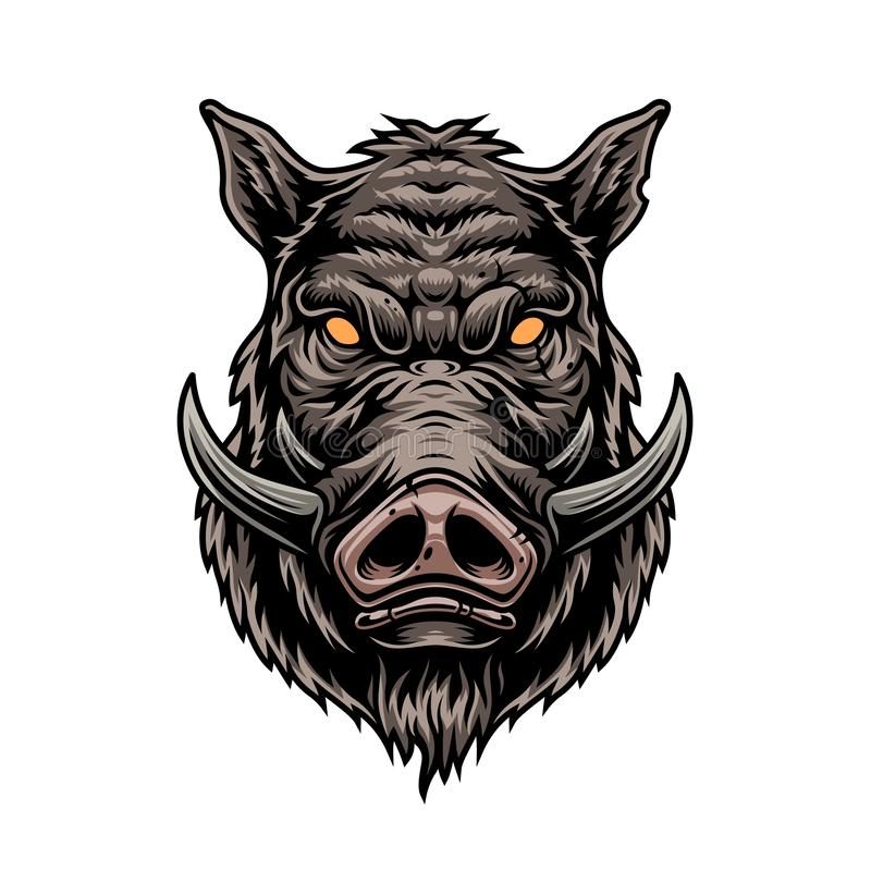 Free Cruel Wild Boar Colorful Vintage Template Royalty Free Stock Image - 160640686