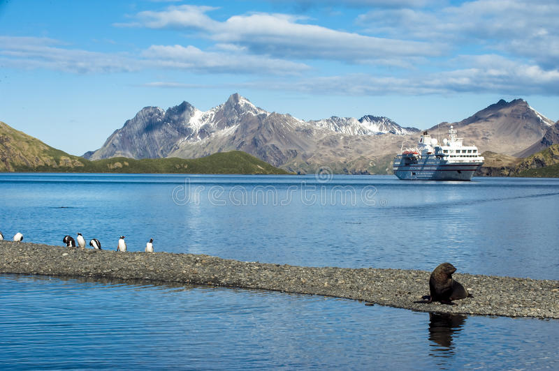 Download Cruise Liner In South Georgia With Penguins, Seal Stock Photo - Image: 27709370